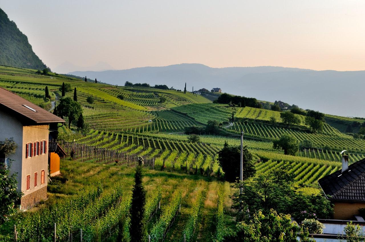 Vignes-Paysages