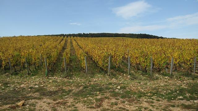 AOC Languedoc - Vin de pays coteaux