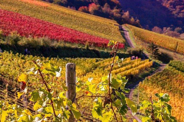 Jura : les cépages, appellations et caractéristiques des vins de la région