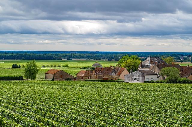 Bourgogne : les cépages, appellations et caractéristiques des vins de la région