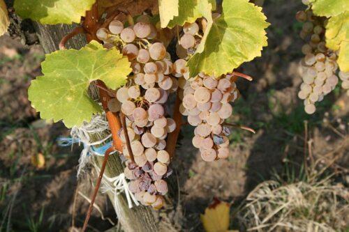 Savoie vin blanc