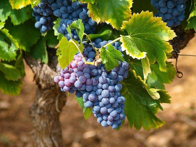 Savoie vin rouge