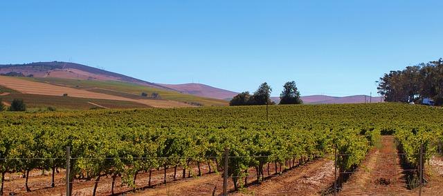 Vignoble Sud ouest de la France
