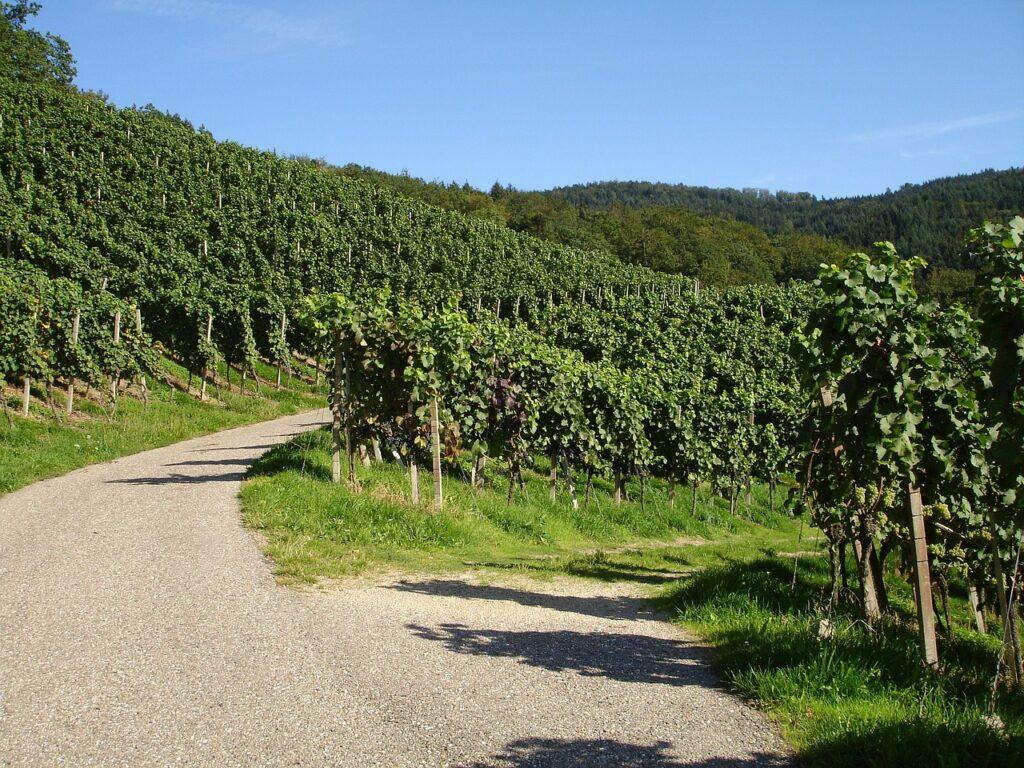 loire-route-vins