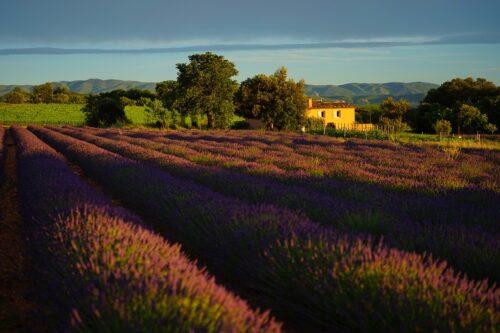 Oenotourisme en Provence : la route des vins de Sud