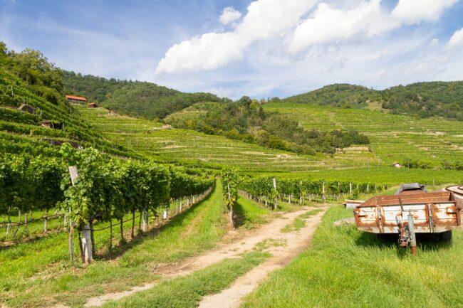 Oenotourisme : la route des vins en côte du Rhône