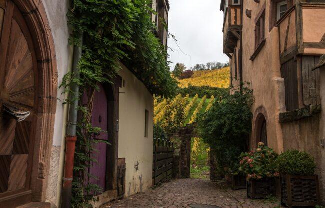 Oenotourisme en Alsace : la route des vins alsaciens