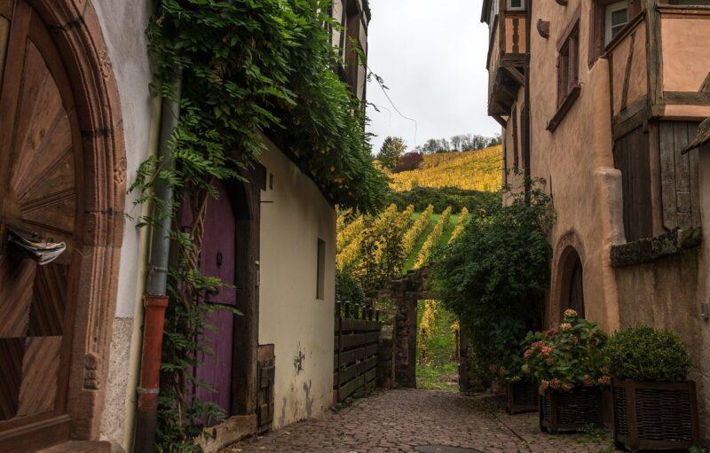 sentier-viticole-alsace-velo