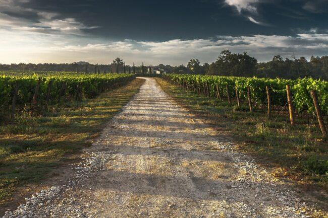 Oenotourisme : découvrir 3 routes des vins de Loire