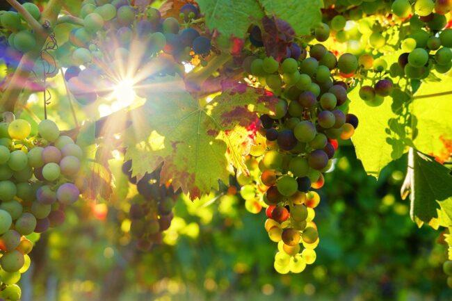 Oenotourisme dans le Médoc : la route des vins des Grands crus